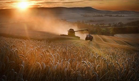 Campaña de cosecha